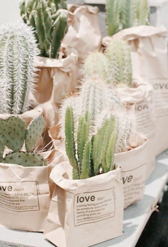 Umweltfreundliche Gefälligkeiten, hergestellt aus einer Sukkulentenpflanze und einer Tüte zum Abdecken der Vase