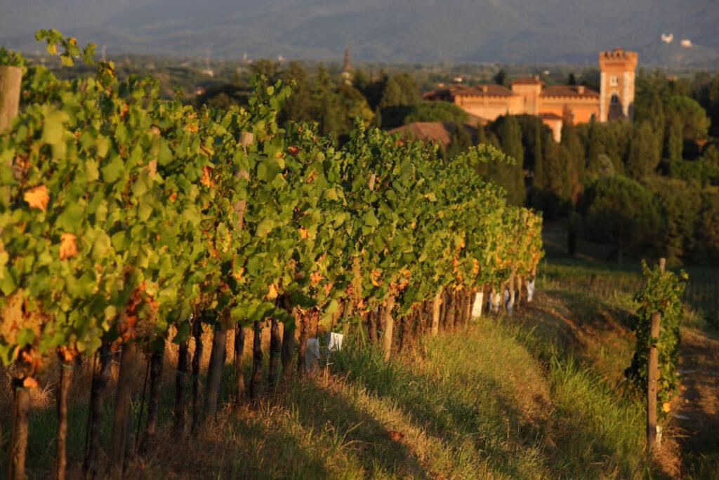 Collio hills: vineyards of Spessa Castle